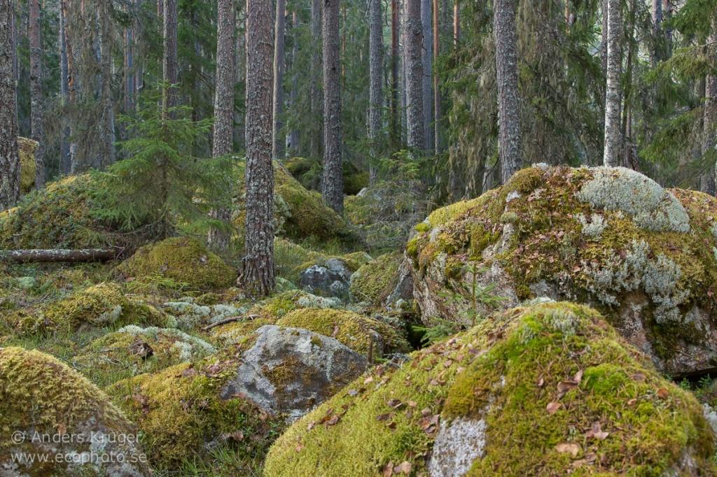 Ramsellskogen-9970