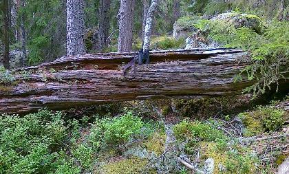 skog_laga