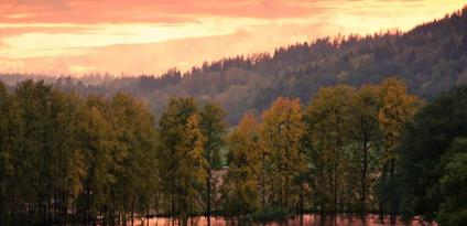 skog_rosa_himmel